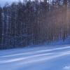 雪に流れる 影