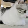 猫用語 ~香箱座り~