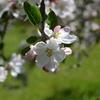春の花(車事情 PART1)