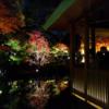 浮かび上がる紅葉、幻想的な世界 / 大田黒公園