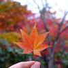 昭和記念公園で秋を探してきました