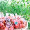 「窪田の野菜」が目印!トマトの写真を撮りました