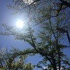 外出自粛の日々12日目〜素晴らしい晴天のもと散歩する