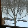 エゾ鹿たちが現れた弟子屈の3月・とある雪降る日に