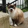 ◆山猫達(2017/11/7)