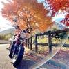 モンキー125とゆく旅 #13 丹沢湖〜中川温泉《紅葉編》(神奈川県道76号山北藤野線)