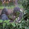 世田谷の野毛公園にある三等三角点「野毛」