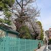 神戸・北野天満神社から生田川へのコースは、桜はどうかな?のコース。
