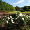ミモザ・ガーデンの日記 新宿御苑のバラ