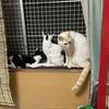 家猫修行中。野良猫成猫を馴らすことが、できない。どうしたらいいのでしょう?