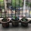 家庭菜園始めたら小4「雨水の地面へのしみこみ方」を実演で学べた。