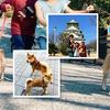【柴犬・子犬】柴子犬と大阪城公園をお散歩! Shiba Inu walking in Osaka Castle Park!