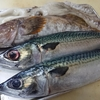 魚仕入! ホタルイカの炊き込みご飯定食