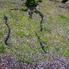 2020/04/13 Mon. 春の冷雨