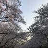 行ってきました。お花見!in上野①