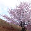 弘法山に登って桜を眺めた