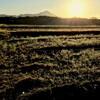 大麦の圃場の溝切りと畦畔の草刈りと脱芒機と「Catalina祭り」