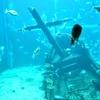 五島列島沖の深海沈む残骸が巨大潜水艦「伊58」とほぼ特定