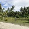 南の島の森