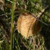 木枯らし1号とカマキリの卵