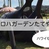 ハワイを日本で!アロハガーデンたてやま(館山)はハワイの人も満足!
