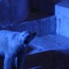天王寺動物園 ホッキョクグマ