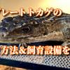 オニプレートトカゲの飼育方法&飼育設備を紹介!