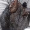 マダラ猫から黒猫へ