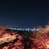 京都旅行 圓徳院・清水寺・永観堂の夜間拝観で紅葉を堪能