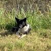 山口県周南市では、野犬の情報を共有できるスマートフォンアプリを配信!