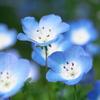 【撮影記vol.6】ご近所公園写ん歩①~公園花壇は花の宝庫だ~