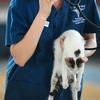 産業獣医師の仕事を掘り下げてみる ~犬猫の飼い主が見た、加計学園問題(その6)~