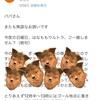 【古河はなもも⭐️緊急参戦決定!】