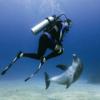 GoPro(ゴープロ)で撮った海の中の写真が神秘的すごくいいぞっ!#goprosea