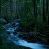 【無料/フリーBGM素材】樹海を彷徨う、ループ『Sea of Trees』イージーリスニング