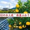 【同情するなら土産くれ‼︎】山口県の幻のお土産・萩夏ふわりを探し求めて・・