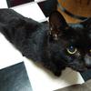猫のペットボウルとトラシュカの話