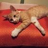 猫、不屈、ネバーギブアップ精神