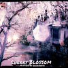 Cherry Blossom & Cat