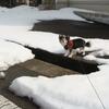 #071 散歩(26) 若宮公園-冬-