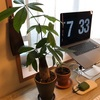 マイルームの観葉植物