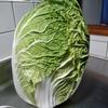 美味しい白菜レシピ3選!簡単な作り方