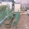 定年したら庭の畑で自家栽培、、、うらやま!!