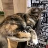 【2019/01/27(日) 茨城県南】猫カフェ「猫喫茶 空陸家」 筑西店に行ってきました【昼はウエストハウス学園店】