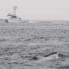 【地震前兆】東京湾に異変!?クジラと見られる死骸が羽田空港の東約3,300mの海上に漂流!5月には鎌倉市・横須賀市とクジラの打ち上げが相次ぐ!相模トラフ・南海トラフなどが心配!!