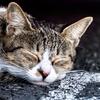 【何もしたくない】うつ病がつらいときはひたすら寝る。苦しい時は一日中休めばいいと思う