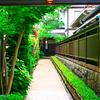 鎌倉の和なお店 | LUMIX 12-60mm