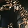 【福島県いわき市】化石がいっぱい!!いわき市石炭・化石館「ほるる」