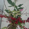 今日の盛岡駅のお花