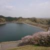 城山湖花見歩き